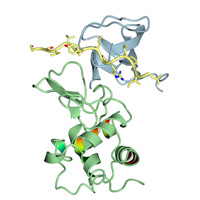 visualize pdb 3ULR